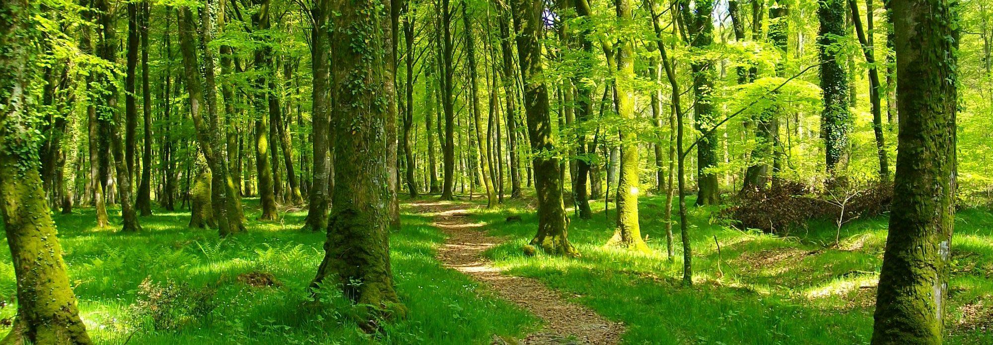 Activités en forêt