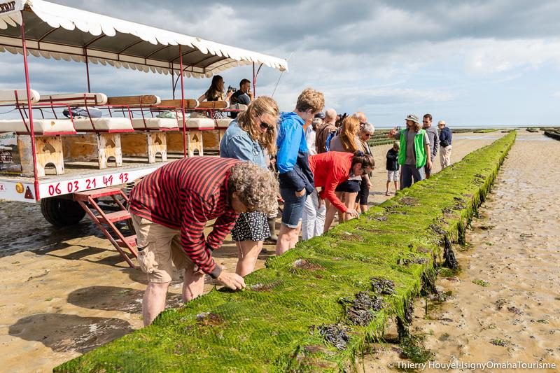 Visite des parcs à huîtres de la baie des Veys en attelage.