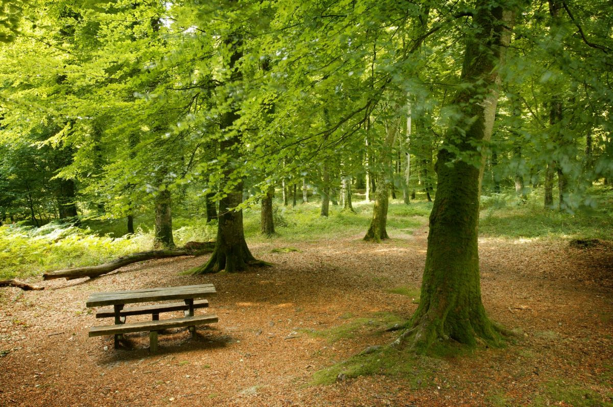 Voir la suite du zoom sur Prendre l'air en forêt de Cerisy