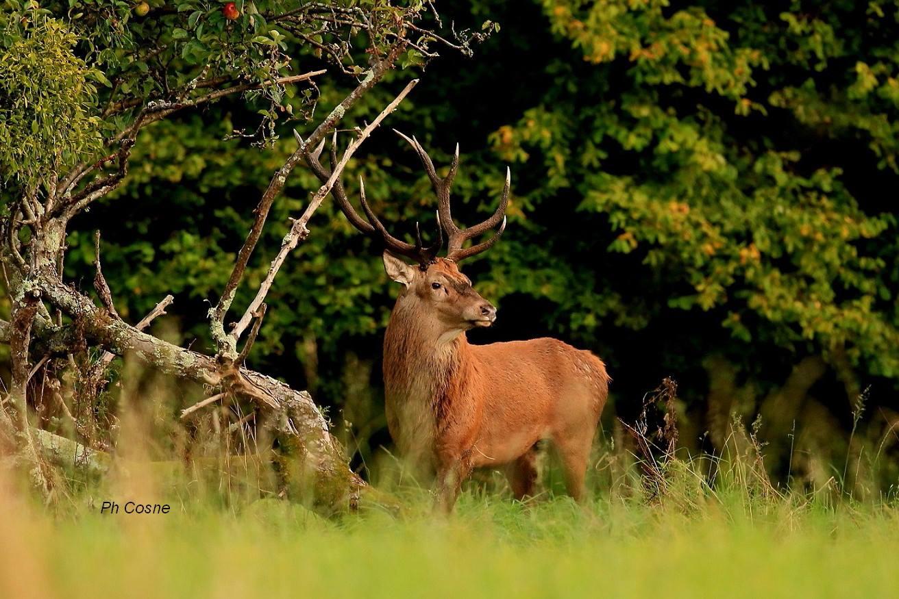 Les animaux de la Forêt de Cerisy ©Philippe Cosne