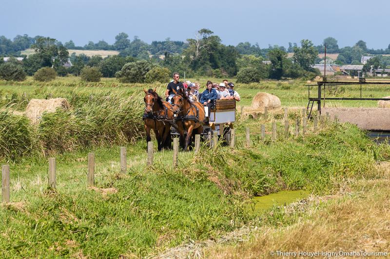 Attelage chevaux